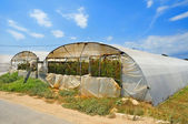 High tunnels — Stock Photo