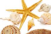 Conchas e estrelas do mar — Fotografia Stock
