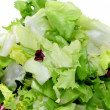 Lettuce mix - Stock Photo