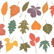 Stock Vector: Vector illustration set of 19 autumn leaves.