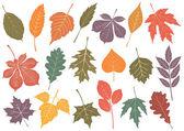 Vector illustration set of 19 autumn leaves. — Stock Vector