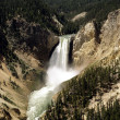 Lower Falls, Yellowstone National Park, Wyoming, — Stock Photo #3553664