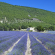 Lavender field 12 - Stockfoto