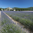 Lavender field - Stockfoto