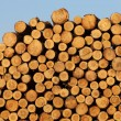 Stock Photo: Wood stock