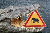 Dangerous crocodile — Stock Photo