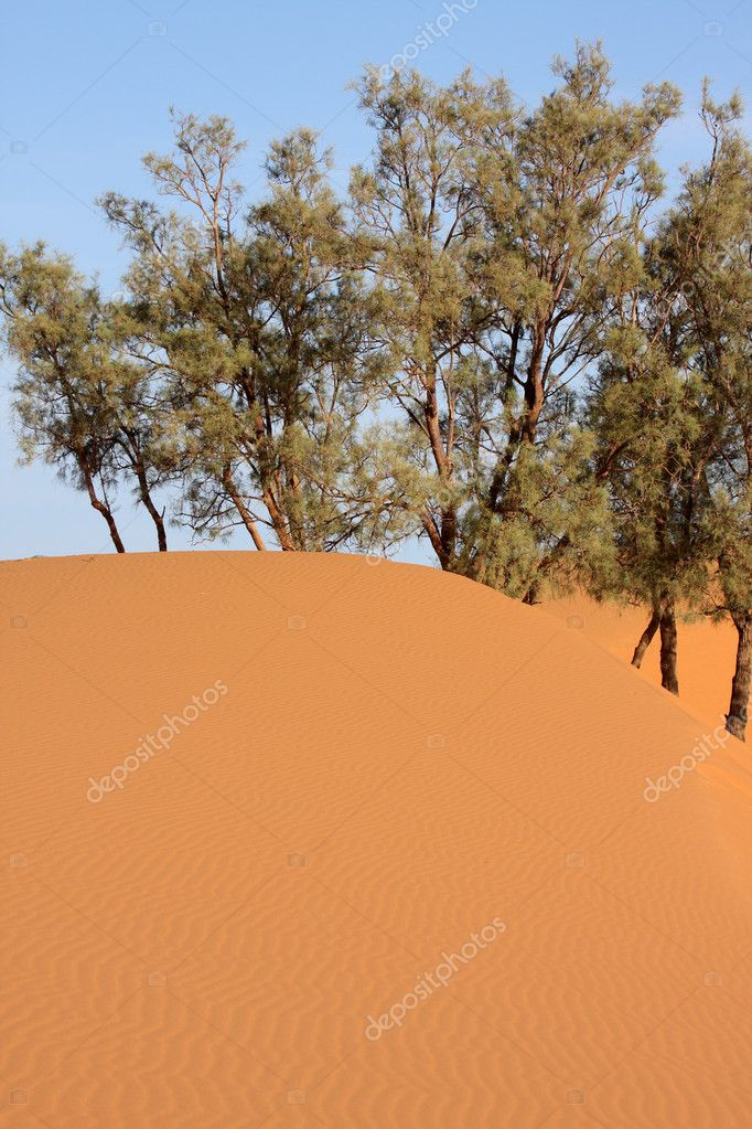 Desert — Stock Photo #3550903