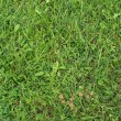 Stock Photo: Grass meadow