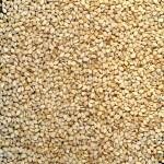 Sesame seeds — Stock Photo #3532012