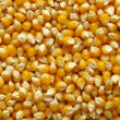 Stock Photo: Maize corn