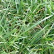 Stock Photo: Grass meadow weed