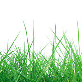 Grass meadow weed — Stock Photo