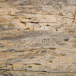 Stock Photo: Old wooden board
