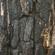 Scorched black bark of old tree - Stock Photo
