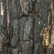 Scorched black bark of old tree — Stock Photo