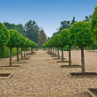 Avenue of lindens  in palace formal garden — Stock Photo