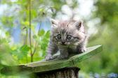 Little kitten in surprise, outdoor shot on summer day — Stock Photo