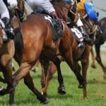Horseracing — Stock Photo #3528926