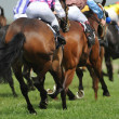 Stock Photo: Horseracing