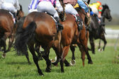 A field of horses and jockeys during a race. — Stock Photo