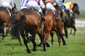 Een veld van paarden en jockeys tijdens een race. — Stockfoto