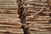 Logging Piles — Stock Photo