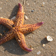 Star fish 2 — Stock Photo #3531270