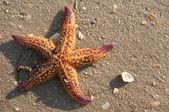 Star fish 2 — Stock Photo