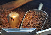 Coffee beans freshly roasted — Stock Photo