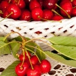 Cherries in a basket — Stock fotografie