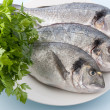 Gilthead — Stock Photo