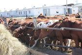 Farm — Stock Photo