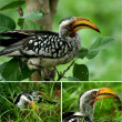 African Birds — Stock Photo