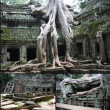 Tomb Raider Temple at Angkor,Camboya — Stock Photo