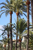 Palma de Mallorca - Balearic Islands — Stockfoto
