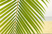 Palm Leaf on the beach — Stok fotoğraf