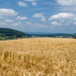 Wheat field and cloudy sky — Stock Photo