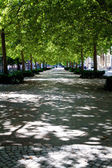 Path through the city park in Konstanz, Germany — Stock Photo