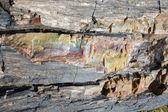 Petrified Wood - close up — Stock Photo