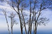 Trees by Lake Superior — Stock Photo