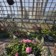 Lincoln Park Conservatory — Stock Photo