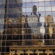 Downtown buildings reflected. — Stock Photo