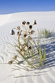 Lonely plant found in White Dunes National Monument — Stock Photo