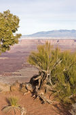 Landscape in Canyonlands National Park — Stock Photo