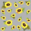 Background. Sunflower. - Stock Vector