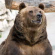 Brown bear — Stock Photo #3576501