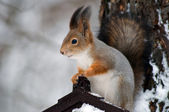 Squirrel on a tree branch — Stock Photo