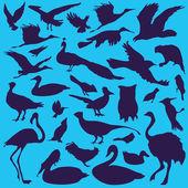 Birds — Vetor de Stock