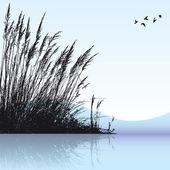Reeds — Stock Vector