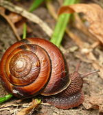 Snail is running away in St. Edward park — Stock Photo